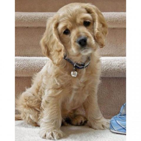 278da652ada0c6e952435f22e09cc9ab--cutest-dogs-cutest-animals.thumb.jpg.aa5b91ad276ceafb595a73e3a86aaacb.jpg