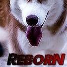 ReBoOrN