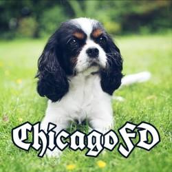 ChicagoFD