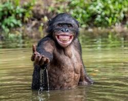oC Mr.Monkey