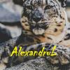 AlexandruL
